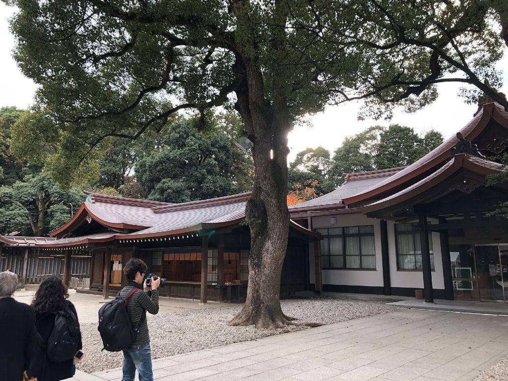 20181129 明治神宮 銀杏_190304_0049.jpg