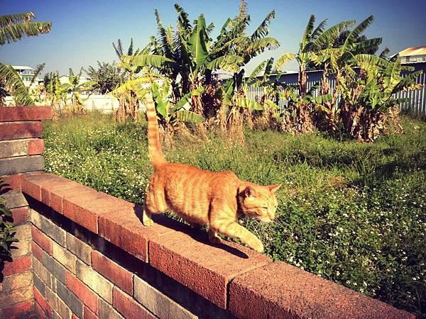 貓卷嗚哇喵