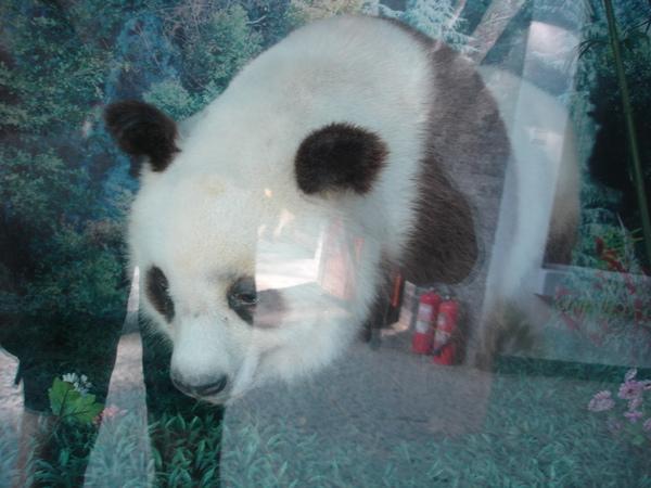 熊貓美美2