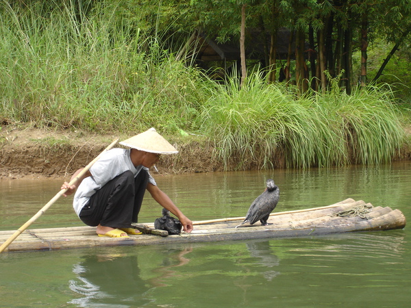 魚鷹抓魚-1