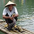魚鷹抓魚-4