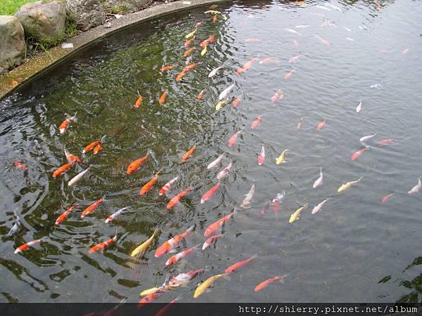 魚兒水中游