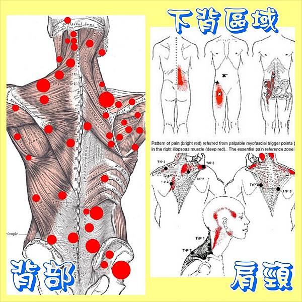 肌筋膜1.jpg