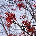 樹上結滿果子
