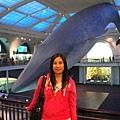 大隻的鯨魚