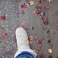 地上還有落下來的楓葉,小小一片好可愛