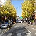 梨大也處處是銀杏,過個馬路也要停下來拍
