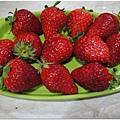 洗過澡的草莓