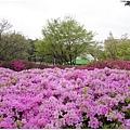 很大的公園,很多韓國人全家大小來運動,騎腳踏車