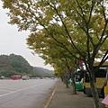 今天是雨天,這裡的葉子黃的快一些