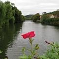 橋上一朵花