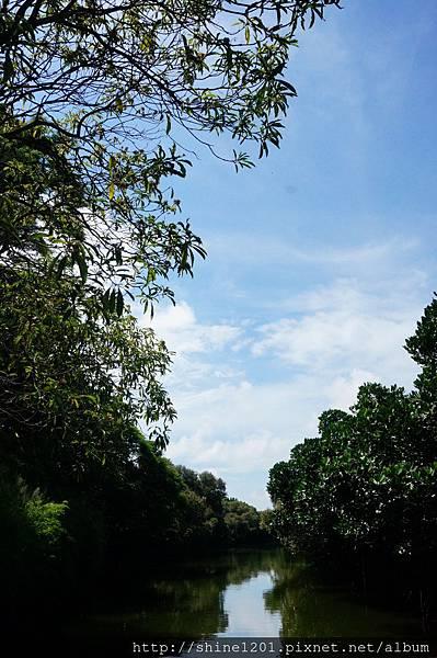 台南景點 四草綠色隧道【台版亞馬遜河