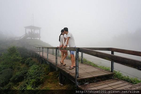 南投旅遊景點 銀杏森林