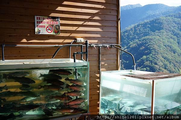 南投清境景觀餐廳 塔洛灣平價餐廳