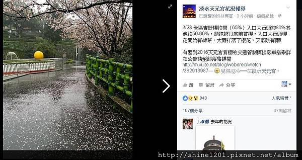 【天元宮櫻花】淡水天元宮櫻花花況&2016公車接駁車及管制資訊