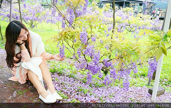 【淡水紫藤咖啡園】天元宮紫藤咖啡園水源園區.2016/4/11浪漫紫色風暴盛開