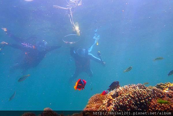 墾丁萬里桐浮潛  墾丁後壁湖浮潛 水到魚行潛水館