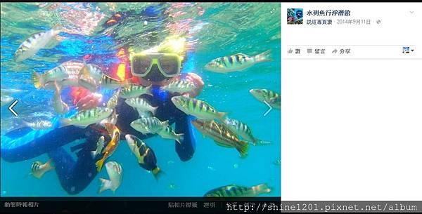 萬里桐潛水 後壁湖潛水 水到魚行浮潛館