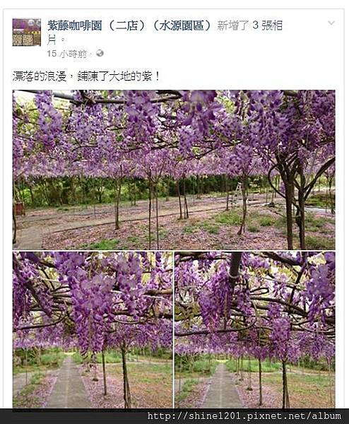 淡水紫藤花2017
