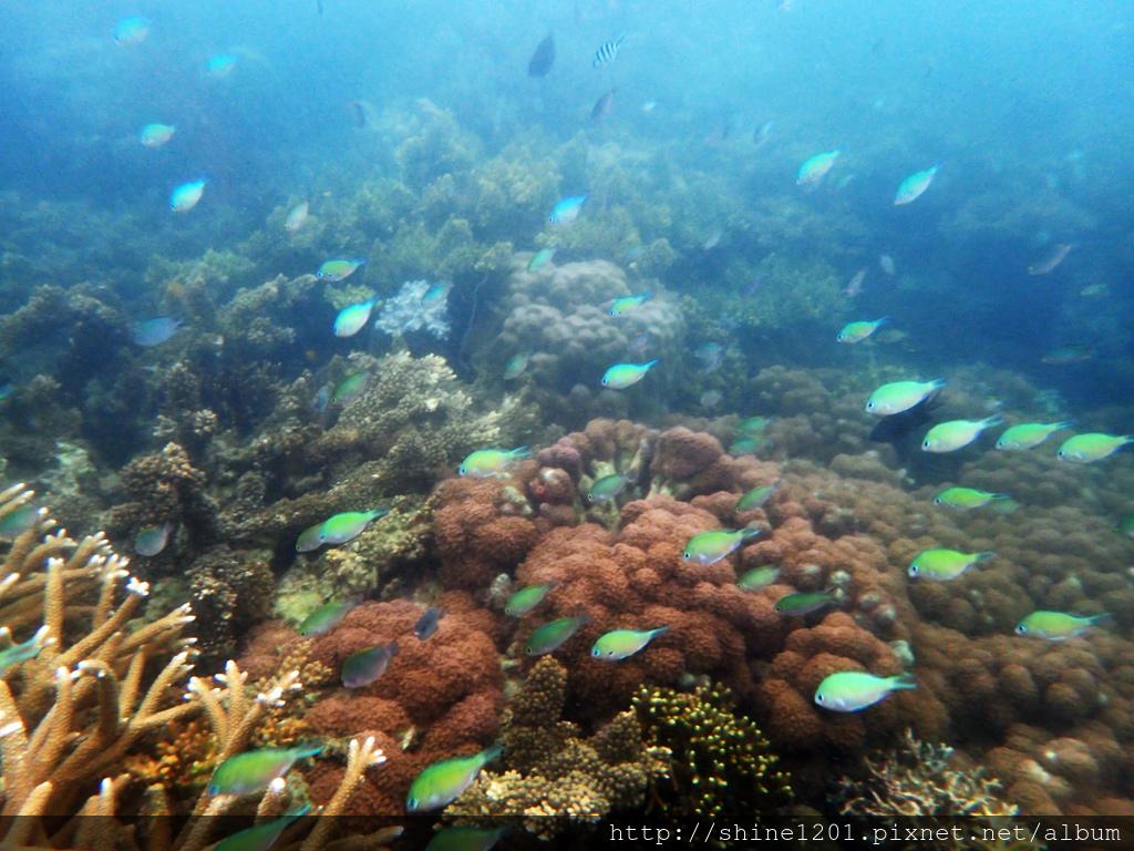 菲律賓旅遊 巴拉望.科隆島菲律賓旅遊 巴拉望.科隆島
