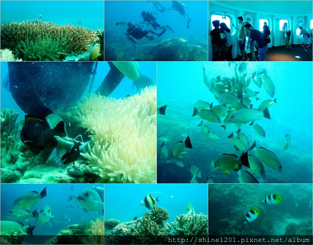 魚眼公園|關島親子景點.關島浮潛.關島潛水