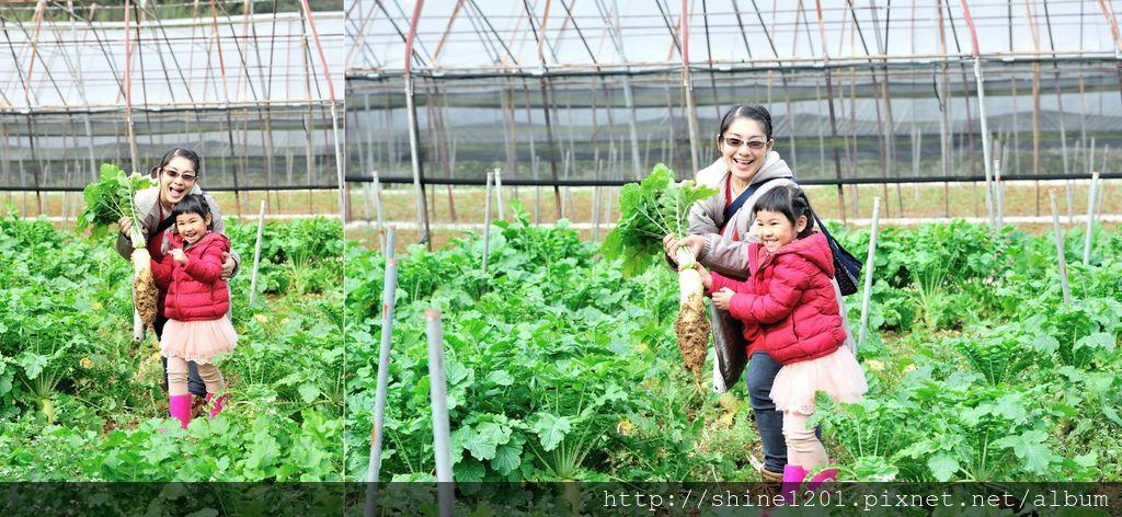內湖親子草莓園美食推薦|桂香草莓園&COCO32咖啡棧