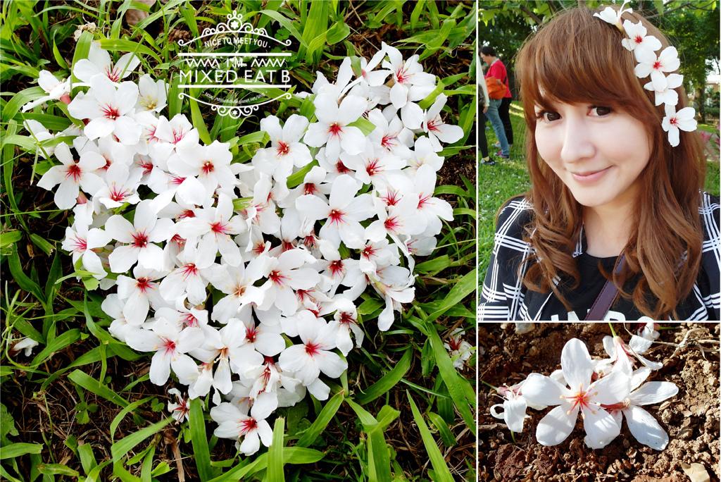 桃園-油桐花-0-1