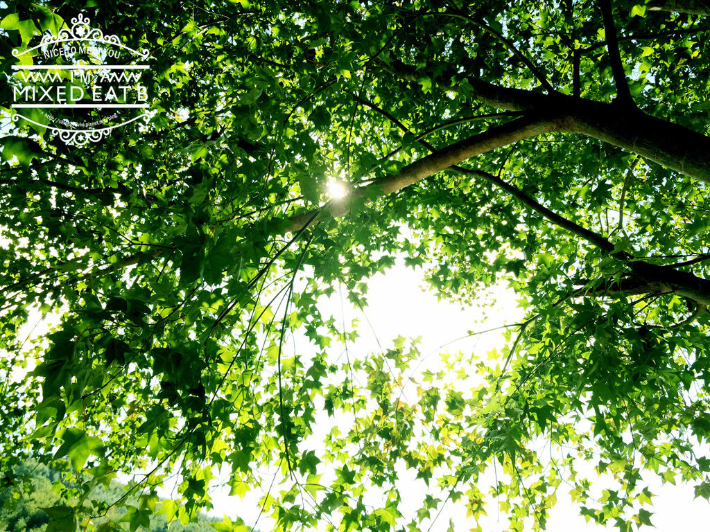 拉拉山-樂野營區露營+日本Smile LED療癒小提燈-4-5