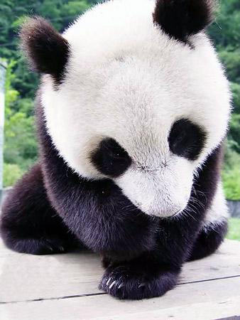 熊貓.jpg