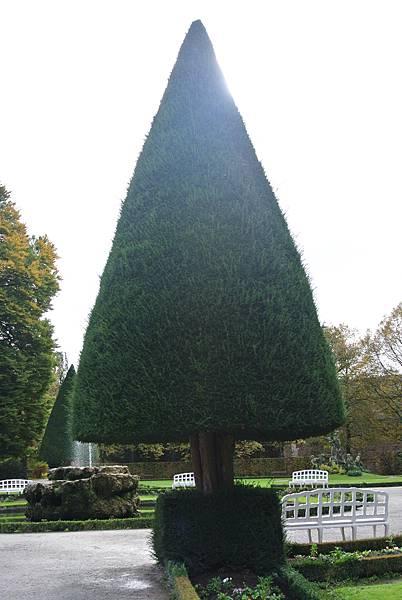 四處可見的錐形樹.JPG