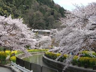 山科疏水-日本網頁介紹之照片.jpg