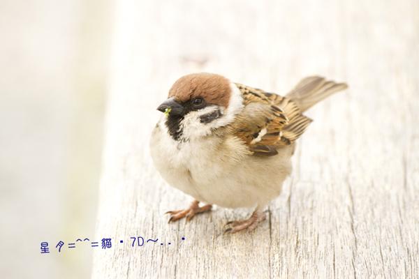 1c鳥01