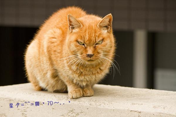 1b貓 (5)
