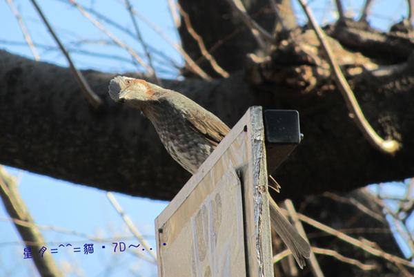 1c鳥04