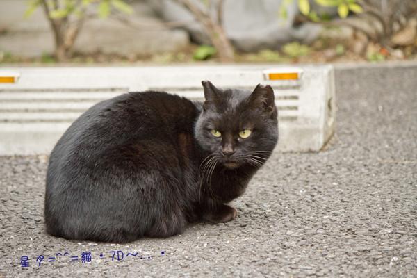 1b貓 (4)