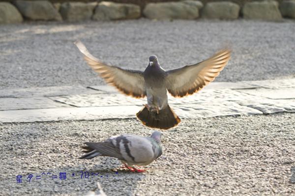 1c鳥02