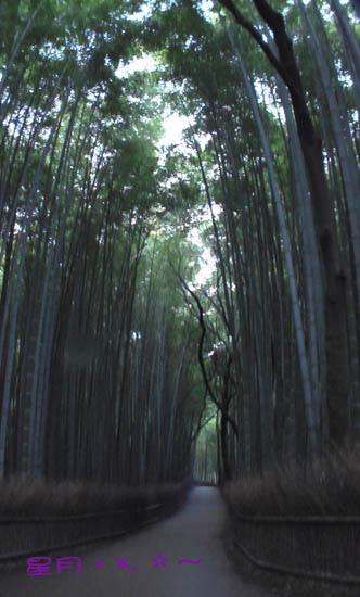 那年--嵯峨野の竹林