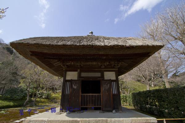 2013貓・7D~鎌倉