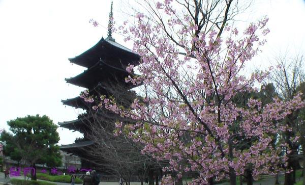東寺-梅‧桜