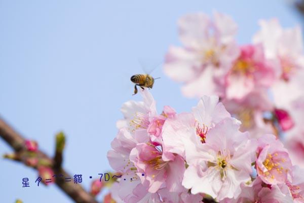7D~桜・花