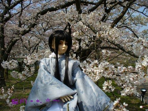 尋花的時日..京都~桜