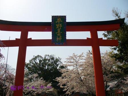 平野神社~桜