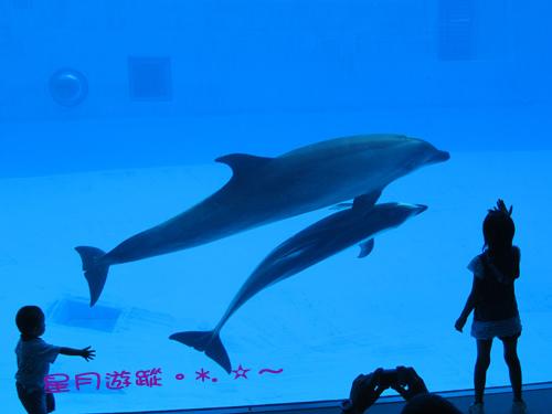 名古屋港水族館~2011中部自由行