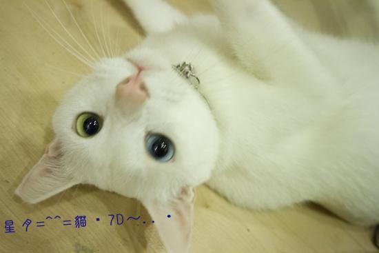 「貓」貓・7D