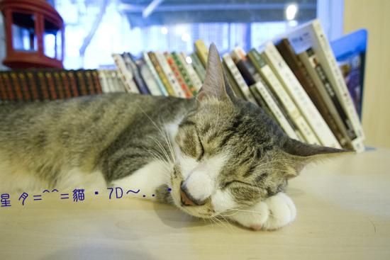 a貓・7D  (3)