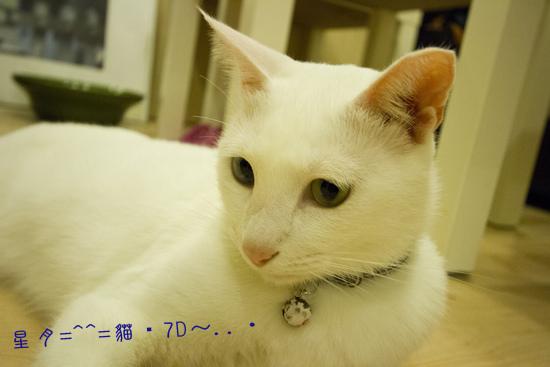 a貓・7D  (4)