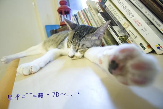 a貓・7D  (9)