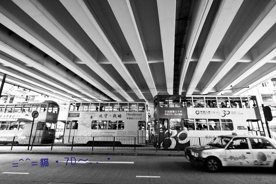貓・7D~香港Ⅱ2014