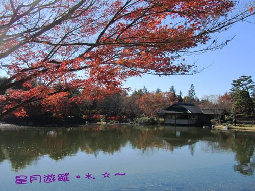 日本庭園-昭和記念公園Ⅱ2013東京秋