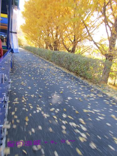 国営昭和記念公園Ⅳ2013東京秋